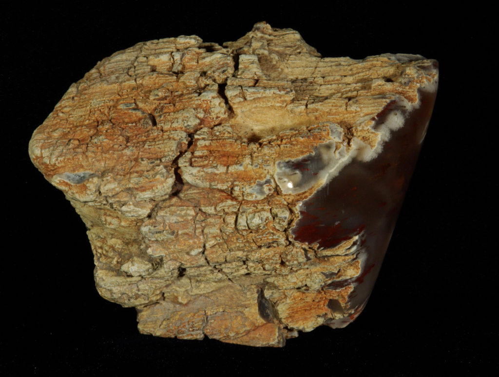 California – PetrifiedWood ROCKS and Paperweightstore com